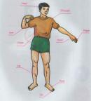 A. Parts of the body - Unit 9 trang 96 SGK Tiếng Anh 6