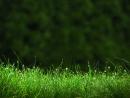 Viết một bài văn nói lên vẻ đẹp của loài cỏ