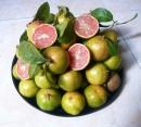 Hãy tả một cây ăn quả nơi vườn quê, vườn nhà nơi em ở