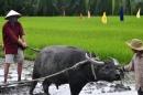 Tả hình ảnh một bác nông dân đang cày ruộng