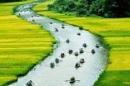 Việt Nam đất nước thân yêu