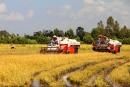 Tả chiếc hái gặt lúa của nhà nông