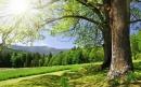 Bài văn nghị luận: Bàn về cái đẹp trong thiên nhiên và trong xã hội