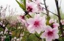 Soạn bài Mùa xuân nho nhỏ