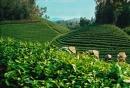 Hình 1 và hình 2 cho biết loại cây trồng nào có ở Thái Nguyên và Bắc Giang ? Xác định vị trí của hai địa phương này trên bản đồ Địa lí tự nhiên Việt Nam.