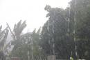 Dựa vào bảng số liệu, em hãy cho biết ở Buôn Ma Thuật, mùa mưa vào những tháng nào