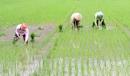 Quan sát các hình dưới đây, em hãy kể các công việc phải làm trong việc sản xuất lúa gạo.