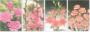 Bài 2 trang 51 SGK Công Nghệ 6