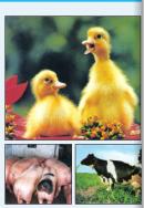 Câu 1 trang 129 SGK Công Nghệ 7