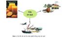 Câu 1 trang 8 SGK Công Nghệ 9 - Trồng cây ăn quả