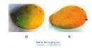 Câu 10 trang 70 SGK Công Nghệ 9 - Trồng cây ăn quả