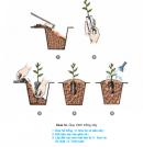 Câu 5 trang 70 SGK Công Nghệ 9 - Trồng cây ăn quả