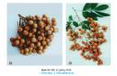 Câu 3 trang 43 SGK Công Nghệ 9 - Trồng cây ăn quả
