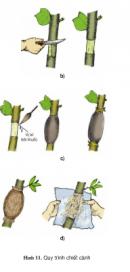 Câu 6 trang 70 SGK Công Nghệ 9 - Trồng cây ăn quả