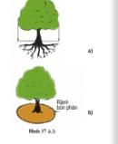 Thực hành bài 14 trang 66 SGK Công Nghệ 9 - Trồng cây ăn quả