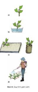 Thực hành bài 4 trang 24 SGK Công Nghệ 9 - Trồng cây ăn quả