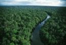 Với khí hậu như vậy, Đông Nam Á chủ yếu có loại rừng gì ?