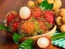 Câu 3 trang 57 SGK Công Nghệ 9 - Trồng cây ăn quả