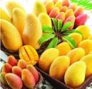 Câu 1 trang 53 SGK Công Nghệ 9 - Trồng cây ăn quả