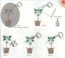 Thực hiện thí nghiệm trang 114 SGK Khoa học 4