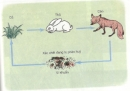 Chỉ ra mối quan hệ về thức ăn trong tự nhiên qua sơ đồ sau