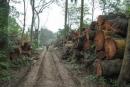 Tại sao không nên chặt cây bừa bãi để lấy củi đun, đốt than ?