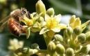 Sưu tầm tranh ảnh về hoa thụ phấn nhờ côn trùng hoặc nhờ gió