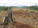 Sưu tầm một số tranh ảnh, thông tin về nạn phá rừng và hậu quả của nó