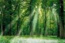 Trong các hình dưới đây, theo bạn, môi trường tự nhiên đã cung cấp ý cho con người những gì và nhận từ con người những gì ?