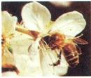 Hiện tượng đầu nhụy nhận được những hạt phấn của nhị gọi là gì?