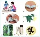 Hãy chỉ vào từng hình và nói về sự phát triển của hạt mướp từ khi được gieo xuống đất cho đến khi mọc thành cây, ra hoa, kết quả,..