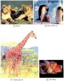 Trong các động vật dưới đây, động vật nào đẻ trứng, động vật nào đẻ con ?