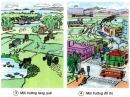 Bạn sống ở đâu, làng quê hay đô thị?