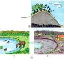 Theo bạn, việc phá rừng dẫn đến những hậu quả gì?