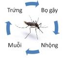 Hãy vẽ (hoặc viết) sơ đồ chu trình sinh sản của một loài côn trùng