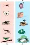 Hãy chỉ ra nơi đẻ trứng (có trong cột B) của mỗi con vật (có trong cột A)