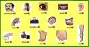 Vocabulary - Phần từ vựng - Unit 9 Tiếng Anh 6