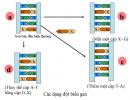 Tại sao nhiều đột biến điểm như đột biến thay thế cặp nucleotit lại hầu như vô hại đối với thể đột biến?