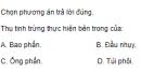 Câu 5 trang 163 SGK Sinh học 11 Nâng cao