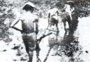 Tại sao các nhà yêu nước ở Việt Nam thời bấy giờ muốn noi theo