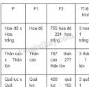 Xem bảng 2 và điền tỉ lệ các loại kiểu hình ở F2 vào ô trống?