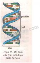Thu hoạch -  Thực hành: Quan sát và lắp mô hình ADN