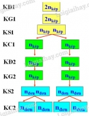 Bài 4 trang 33 SGK Sinh học 9