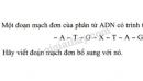 Bài 4 trang 47 SGK Sinh học 9