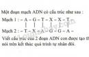 Bài 4 trang 50 SGK Sinh học 9
