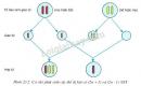 Quan sát hình 23.2 và giải thích sự hình thành các cá thể dị bội ( 2n+1) và ( 2n-1) NST
