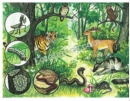 Quan sát hình 50.1 và cho biết: Những thành phần vô sinh và hữu sinh có thể có trong hệ sinh thái rừng.