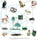 Quan sát hình 50.2 trang 151 và thực hiện các yêu cầu sau: Cho biết sâu ăn lá tham gia vào các chuỗi thức ăn nào? Hãy sắp xếp các sinh vật theo từng thành phần chủ yếu của hệ sinh thái?