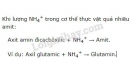 Bài 3 trang 27 SGK Sinh học 11