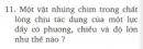 Bài 11 trang 62 SGK Vật lí 8